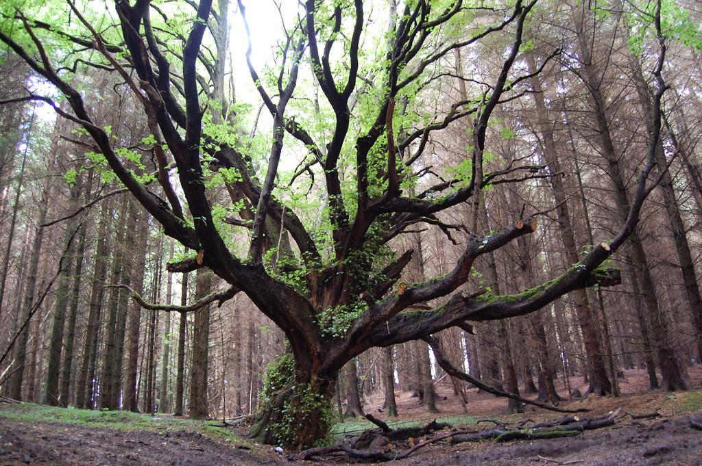 Baum mit Moss